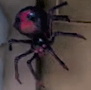 LM3 Spider.png
