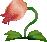 Bulb Bush.png