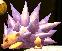 A Harry Hedgehog defending itself in Yoshi's New Island.