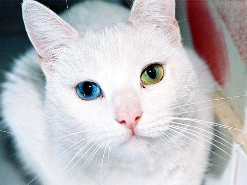 Ojos de gato.jpg