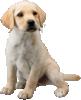 Labrador's Spirit sprite from Super Smash Bros. Ultimate