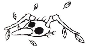 A Skeleton Goonie
