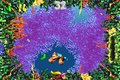 Fish Food Frenzy GBA Bonus Level 1.png