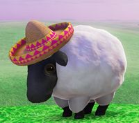 SMO - Sombrero Sheep.jpg