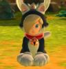 Cat Rosalina with a collar
