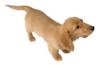 Miniature Dachshund Sticker.png