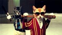 CatMafia.jpg