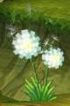 Dandelion.png