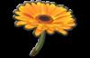 A Flower Glider from Mario Kart 8