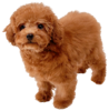 Toy Poodle's Spirit sprite from Super Smash Bros. Ultimate